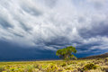 Storm Clouds and Tree Royalty Free Stock Photo