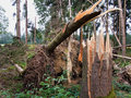 Storm damage. trees in the forest after a storm. Royalty Free Stock Photos