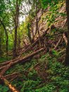 Storm devastation of forest in the swiss alps Royalty Free Stock Photo