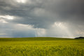Stormy clouds over field of wheat Royalty Free Stock Photo