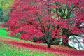 Stourhead Garden - Lake and Acer - Autumn Colours, Wiltshire Royalty Free Stock Photo