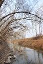 Strömma under de krokiga poplarsna Arkivfoton