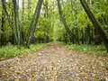 Straight dirt alley in autumn park Royalty Free Stock Photo