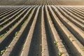 Straight dirt potato lines in agricultural area at springtime before sprouting Royalty Free Stock Photos