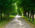 Straight way through forest road illuminated by the sunlights Royalty Free Stock Image