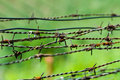 Strands of barbed wire Royalty Free Stock Photography
