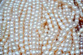 Strands of Pearls Royalty Free Stock Photo