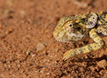 The strange African Chameleon Stock Photo