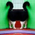Strange cat portrait fun joke Stock Photography