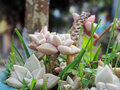 Strange plant with succulent leaves Royalty Free Stock Image