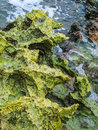 Strange rocks on the seashore Stock Images