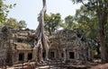 Strangler fig over a khmer temple giant Stock Photo