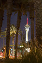 Stratosphere tower and palm trees in las vegas nevada hotel casino is located on the north end of strip the is the tallest Royalty Free Stock Photo