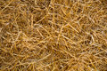 Straw abstract texture Foto de archivo