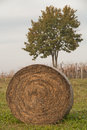 Straw bale of on a meadow Royalty Free Stock Photo