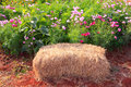 Straw bales seating for photography selfie in the park Royalty Free Stock Images