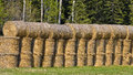 Straw bales stack of pressed round stocked at the edge of woods Stock Photo
