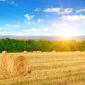 Straw bales on a wheat field and sunrise on sky Royalty Free Stock Photo