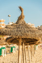Straw beach umbrellas in line Mallorca Spain Stock Image