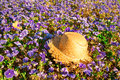 Straw hat on a field of purple pansies with a butterfly evening sun Royalty Free Stock Images