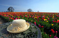 Straw hat and tulip flower garden Royalty Free Stock Photo