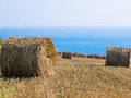 Straw hay bale on the field after harvest Royalty Free Stock Photo