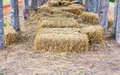 Straw sheaves under the tree Royalty Free Stock Photos