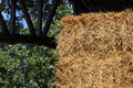 Straw stacked in the stable shed to feed the horses Royalty Free Stock Photo