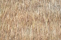 Straw texture Royalty Free Stock Image