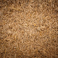 Straw texture see my other works portfolio Royalty Free Stock Photo