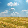 Straw under cloudy sky in windrows Stock Photography