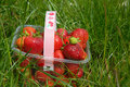 Strawberries in basket on grass Royalty Free Stock Photos