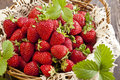 Strawberries in basket Royalty Free Stock Photo