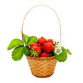 Strawberries in the basket sweet ripe isolated on white Royalty Free Stock Photography