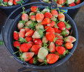 Strawberries in a black  bucket Royalty Free Stock Image