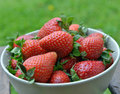 Strawberries in a bowl on table Royalty Free Stock Photo