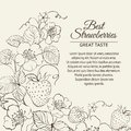 Strawberries brunch over sepia background vector illustration Royalty Free Stock Image