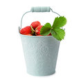 Strawberries in bucket Royalty Free Stock Photo