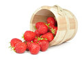 Strawberries in a bucket Royalty Free Stock Photo