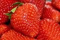 Strawberries closeup of bunch of fresh Royalty Free Stock Photos