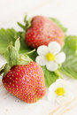Strawberries with flowers fresh leaves and on the boards Stock Image