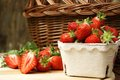 Strawberries fresh from the field Royalty Free Stock Photo