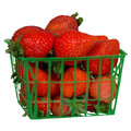 Strawberries freshly picked in a green plastic basket isolated on a white background Royalty Free Stock Photography