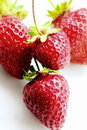 STRAWBERRIES - ISOLATED FRUITS Royalty Free Stock Photo
