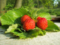 Strawberries on Leaves Stock Image