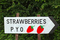 Strawberries pick your own wooden sign Royalty Free Stock Photo