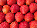 Strawberries row ordered box Stock Image