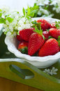 Strawberries in white bowl Stock Image