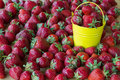 Strawberries in  yellow bucket Royalty Free Stock Photo