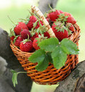 Strawberry in a basket Stock Photo